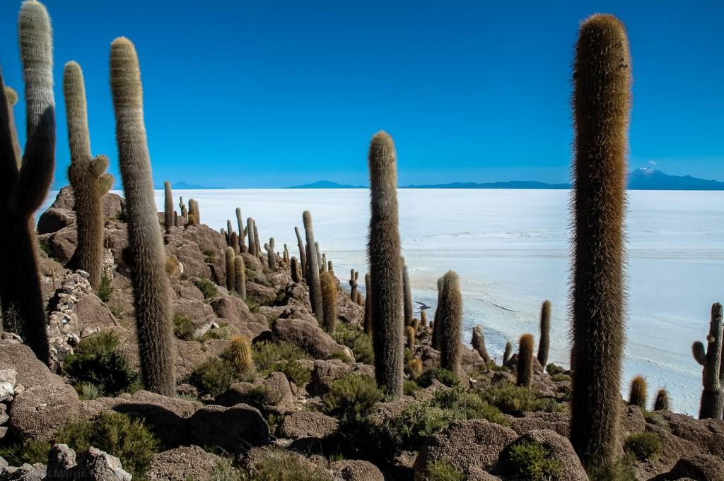 Kaktusowa wyspa