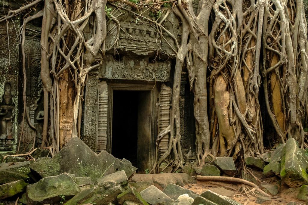 Splątany Angkor Wat