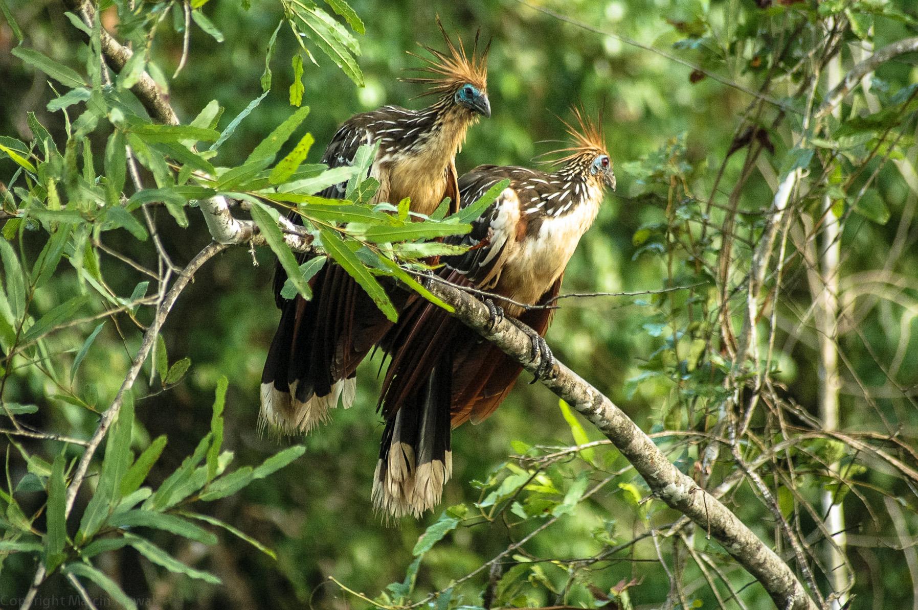 Ptaki na boliwijskiej pampie