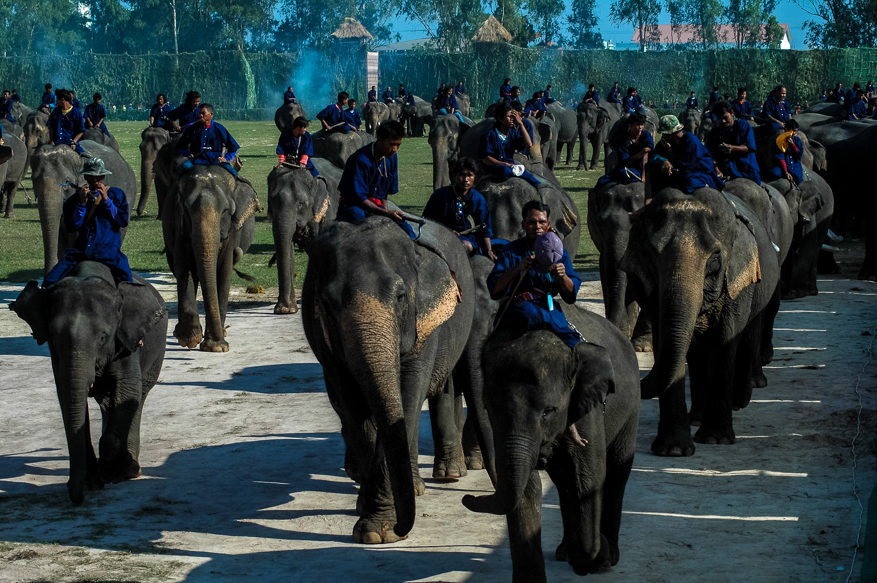 Słonie w Surinie